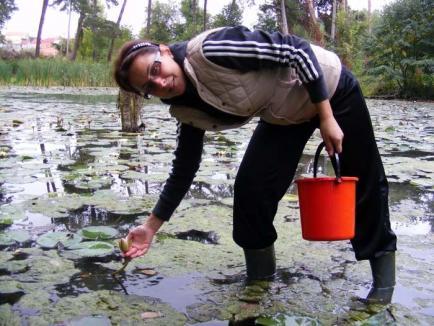 """Nuferi """"la borcan"""": Doi cercetători orădeni salvează nufărul termal de la dispariţie, cultivându-l in vitro (FOTO)"""