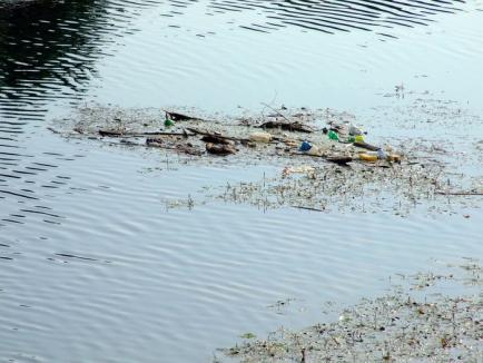 Mor peştii în Criş! Căldura şi debitul mic al râului ucid vieţuitoarele (FOTO)
