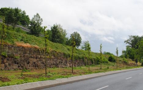 Plantări de primăvară: Aproape 300 de arbori sădiţi în Oradea (FOTO)