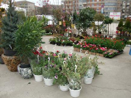 Târgul de grădini şi terase a transformat parcarea Lotus Center într-un parc verde (FOTO)