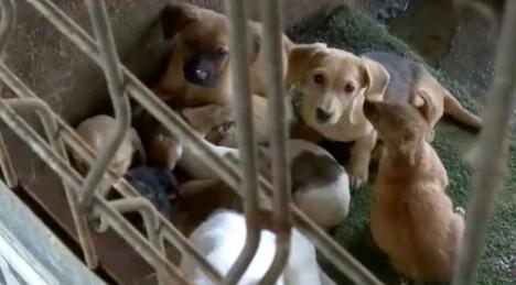 Situaţie absurdă, în Sîntandrei: Câinii luaţi de pe străzi, duşi în… Satu Mare! (FOTO / VIDEO)