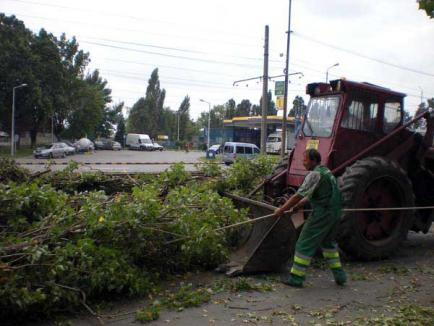 Licitaţia pentru doborâtul arborilor, adjudecată