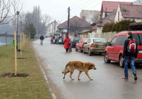 Oraş fără câini: Oradea are ambiţia de a deveni primul oraş din România fără câini maidanezi pe străzi
