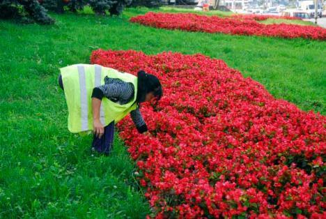 Centrul Oradiei, umplut cu flori