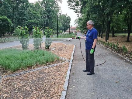 Episcop grădinar: PS Böcskei László, surprins în timp ce uda florile, pentru ca angajații să poată merge la ștrand