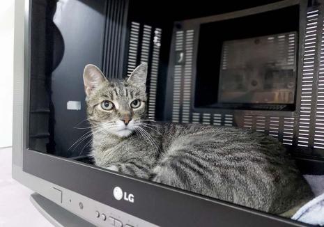 Casa felinelor: Singurul adăpost pentru pisici din Oradea are nevoie de o casă nouă (FOTO)