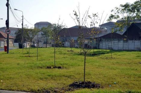 Copaci mari pentru Oradea: Primăria pregăteşte plantările de primăvară