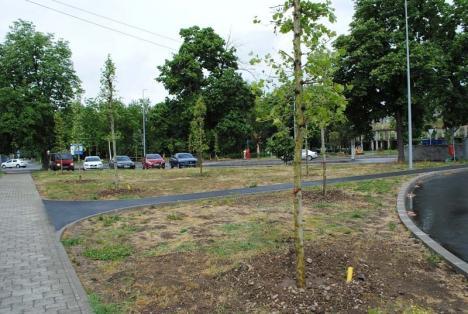 Verdele, la darea de seamă: Câți copaci au fost plantați în Oradea în 2018