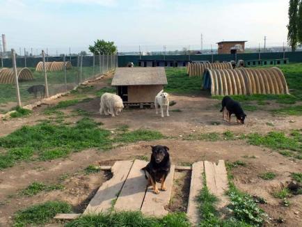 Fără milă! Primarul Ilie Bolojan anunţă că eutanasierile câinilor vagabonzi vor continua