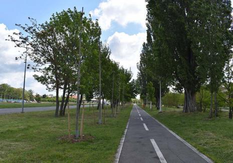 Socoteala verde: În ultimii 12 ani, Primăria Oradea a plantat 26.000 de arbori şi a pus la pământ aproape 8.000