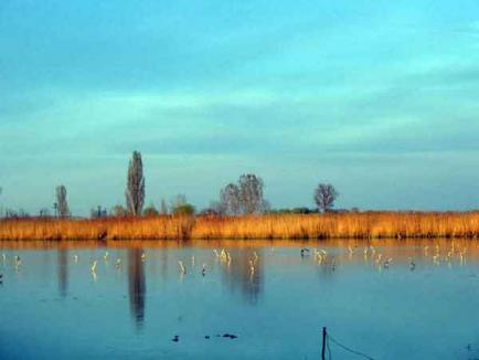 Delta Bihorului