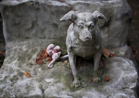 Ultima plimbare: Doi tineri amenajează primul cimitir din Bihor dedicat animalelor