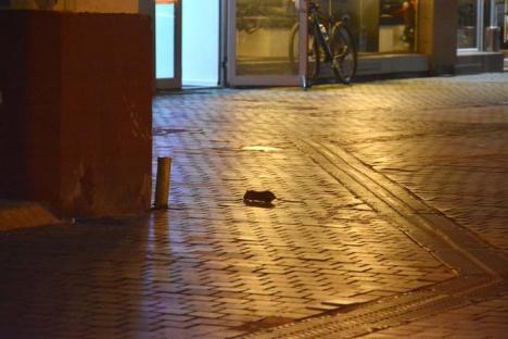 Deratizaţi oraşul! Şobolanii circulă în voie pe Corso