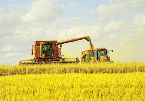 Tot răul spre bine! Fermierii din Bihor înregistrează producţii record, în vreme ce seceta a pârjolit recoltele din sudul ţării