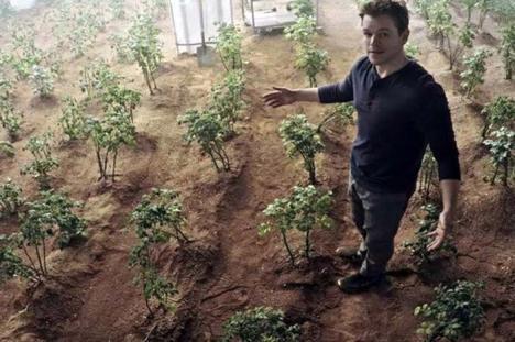 NASA cultivă cartofi ca pe Marte