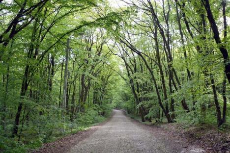 Copaci pe ducă: Peste 40% dintre speciile de arbori din Europa, pe cale de dispariţie