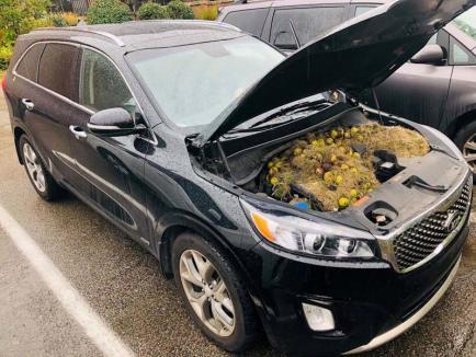 Anotimpul proviziilor: O şoferiţă s-a trezit cu provizii de nuci şi alune sub capotă!