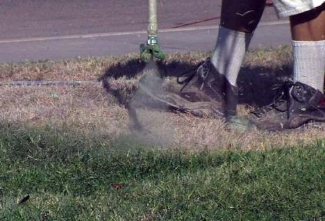 Seceta din SUA duce la iarbă... vopsită