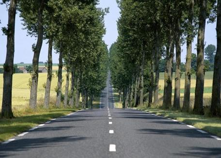 Şomerii indieni vor planta 2 miliarde de copaci