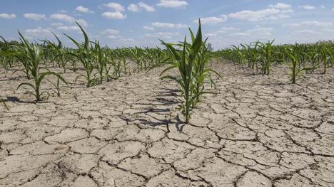 Secetă record: Traversăm cea mai secetoasă perioadă din ultimii 100 de ani!