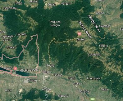 Uniţi în cuget şi-n hoţii: BIHOREANUL vă arată cum 4.600 hectare de pădure sunt vânate de urmaşii unui avocat profitor de pe urma Marii Uniri
