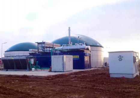 Lumină din... urină: La Săcueni, prima centrală pe biomasă din ţară va face din bălegar curent