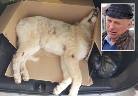 Vânător... de câini: Tatăl unui ofiţer de Poliţie a împuşcat un câine doar pentru că s-a certat cu proprietarul lui