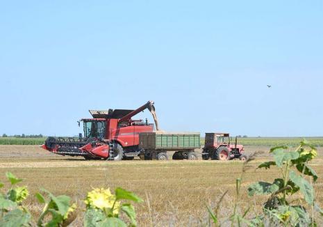 Mult şi... scump! Paradoxul sezonului agricol din Bihor: recolta de grâu este mare, dar făina şi pâinea se scumpesc