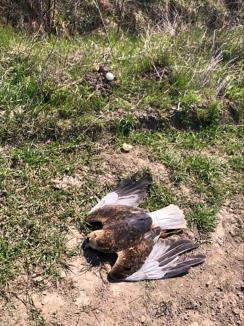 Vânătoare... cu otravă: Sute de ouă infectate puse ca momeală pentru păsări şi animale pe un fond de vânătoare din Bihor (FOTO)