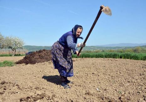 Sărăcia s-a născut la sat! Bătrânii rămaşi în satele din Bihor nu mai au pe cine angaja să le sape grădinile, nici dacă oferă 100 lei pe zi (FOTO)