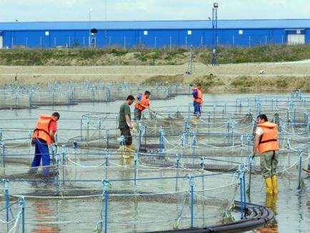 Otravă cu efect întârziat: Deşeurile toxice din zona industrială otrăvesc oameni, animale şi afaceri!
