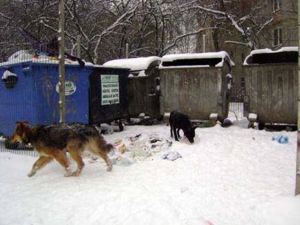 Holocaust canin
