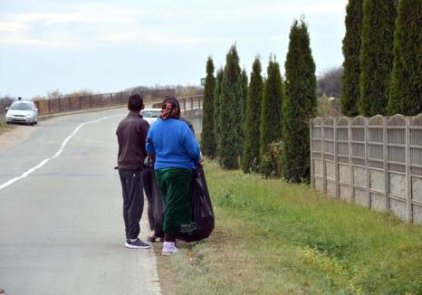 Lene fără leac: Patru din cinci şomeri bihoreni sunt beneficiari de ajutoare sociale și nu vor să muncească