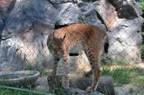 """Zoo în creştere: Ce animale noi are Grădina Zoologică şi care sunt """"vedetele"""" (FOTO)"""