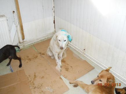 Un nou scandal la adăpostul de maidanezi: O filmare cu câini care muşcă un alt câine pune iubitorii de animale pe jar (VIDEO)