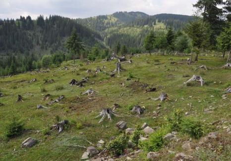 Liber la jaf! Angajaţii Romsilva prinşi că au tolerat tăierile ilegale de păduri scapă în masă de răspunderea penală