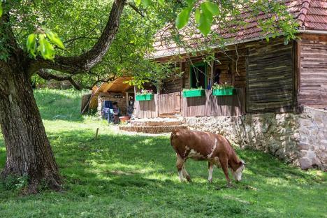 Frumuseţile de acasă: Bihorenii au în împrejurimi atracţii naturale și turistice splendide, dar puţin cunoscute (FOTO)