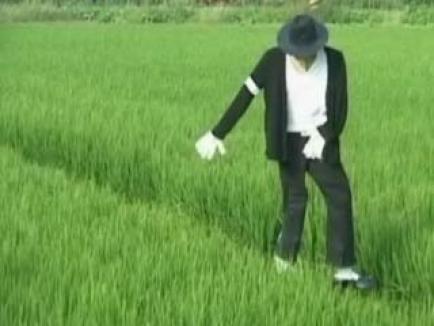 Michael Jackson a ajuns sperietoare de ciori