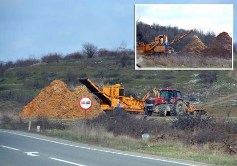 Defrişare... din eroare: Proprietarul unei livezi de la marginea Oradiei s-a trezit că i-au dispărut pomii de pe 1,6 hectare