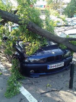 Ne enervează: Un arbore declarat sănătos de Primărie s-a prăbuşit peste un BMW