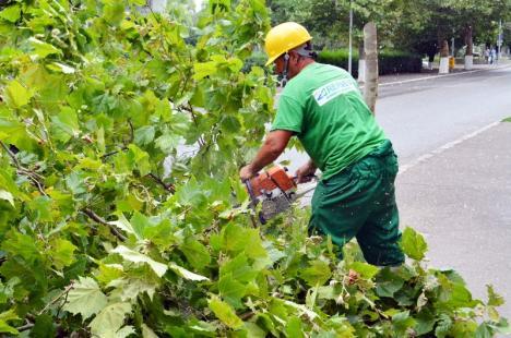 Primăria Oradea răspunde acuzaţiilor USR: 'Suprafaţa de spaţiu verde a crescut, ajungând la 26 metri pătraţi pe locuitor'