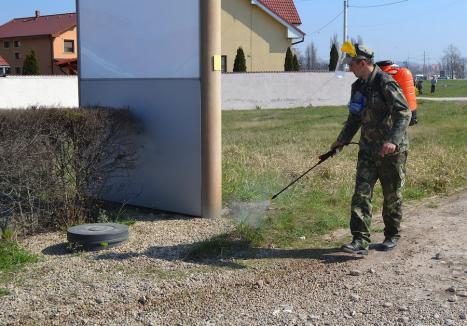Cu repetiție. Luni va începe cea de-a doua etapă de dezinsecție împotriva țânțarilor și muștelor în Oradea