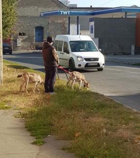 Cu capra prin oraş: La păscut pe străzile Oradiei, ca pe legheleu