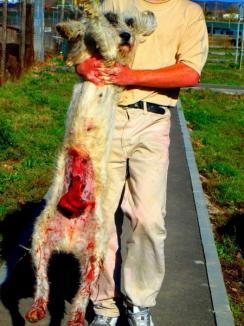 Viral pe Facebook: Un câine cu intestinele scoase afară, fotografiat în adăpostul municipalităţii (FOTO)
