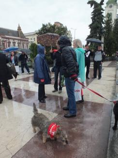 Nu se lasă! Pe ploaie, o mână de orădeni au protestat tacit împotriva eutanasierii câinilor (FOTO)