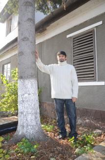 Bradul lui Moş Tomi: Frumosul brad din faţa Primăriei a fost donat de un orădean din grădina casei părinteşti (FOTO)