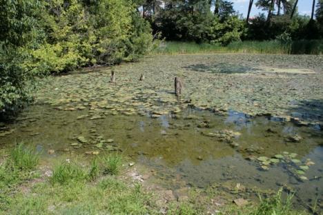 Nuferii din Băile 1 Mai, din nou în pericol: Seceta, furtul de apă geotermală şi consumul ştrandurilor seacă lacul Ochiul Mare