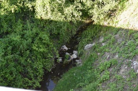 Negru de murdar: Pârâul Negru, care coboară de pe dealurile Oradiei în Crişul Repede, aduce cu el dejecţii menajere (FOTO)