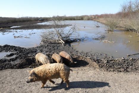 Adio, Cefa! Parcul Natural este la un pas de dispariţie din cauza închiderii fermei piscicole şi a dezinteresului autorităţilor (FOTO)