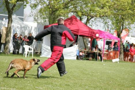 Prietenul câinilor: Orădeanul Alexandru Bondar şi căţeluşa sa au ajuns campioni mondiali la dresaj (FOTO)